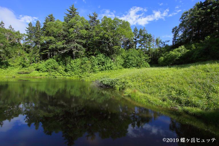 盛夏の妖精ノ池